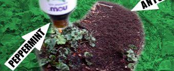 Ants vs Peppermint Oil! A Quiet Place! Patreon!